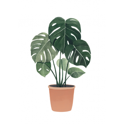 Lámina Monstera