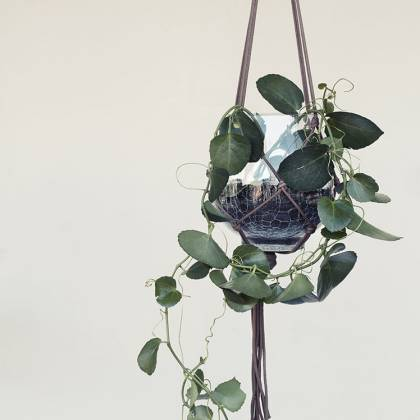 Ibbi hanging Planter