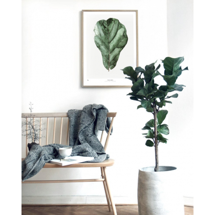 Urban Botanic Decorative Print - Ficus
