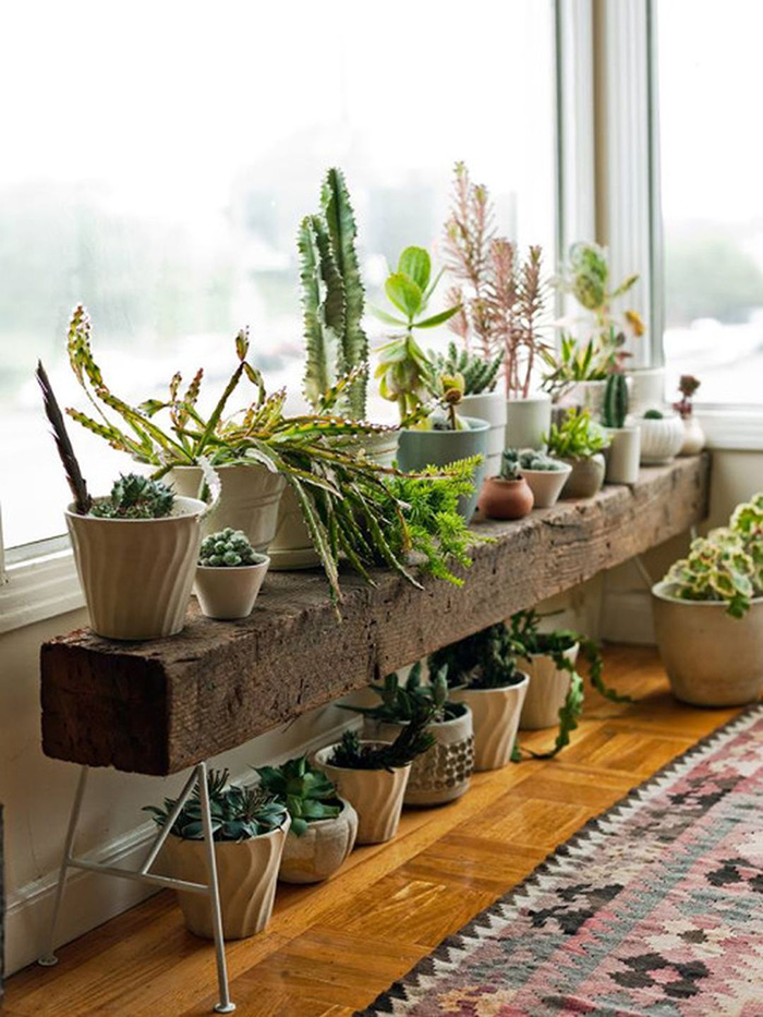 Decorar con plantas de interior, Inuk Home